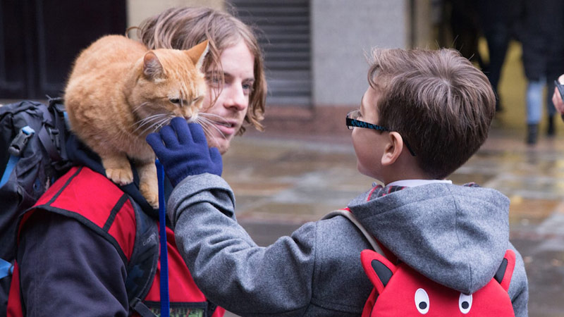 Street Cat Named Bob Pictures